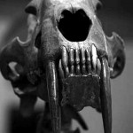 smilodon_close_up